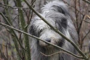 Jac behind a tree