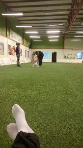 Yxi at obedience training